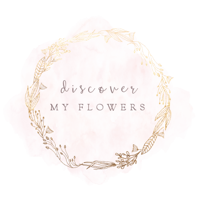 Discover my flowers!